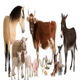 Animale de ferma