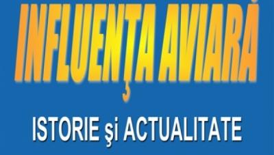 Influenta Aviara - Raport