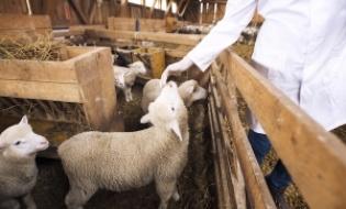 Scrisori deschise ale medicilor veterinari romani catre presedintele ANSVSA
