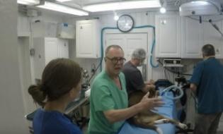 Chirurgi umani care opereaza caini: cand bunele intentii nu sunt suficiente