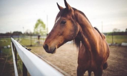 Bolile imunomediate ale pielii la cai