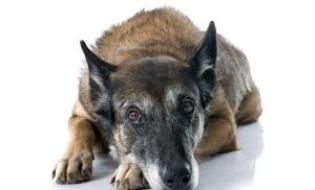 Indicatii oncologice pentru cazurile intalnite la caini si pisici - introducere