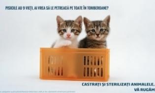Afisul saptamanii - Campanie sterilizare/castrare animale de companie