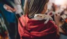 Cum sa va feriti reptilele de companie de pericolele iernii